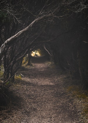 Dark eerie path in the woods